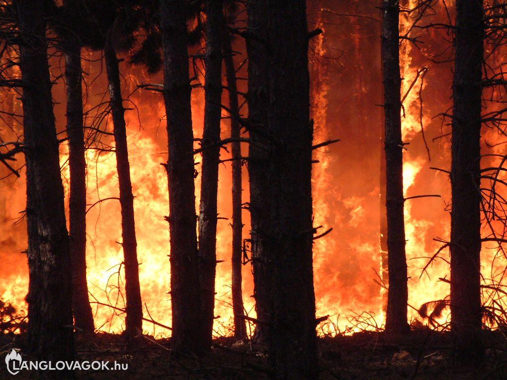 Nagy kiterjedésű erdőtűz Jakabszállás határában
