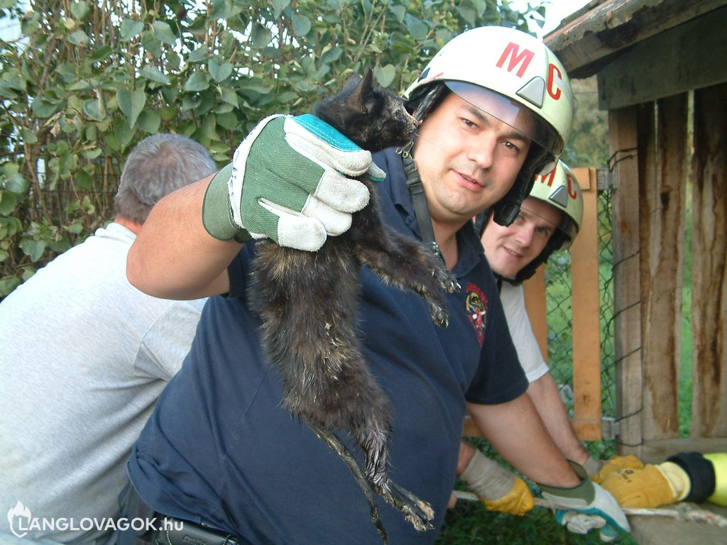 Macskát mentettek egy kútból Somogyváron