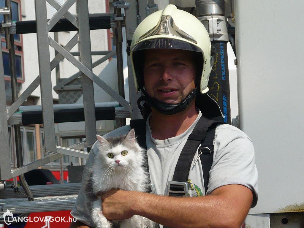 Ereszcsatornában rekedt egy macska Kisújszálláson