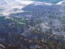 Az erdőtüzek keletkezése