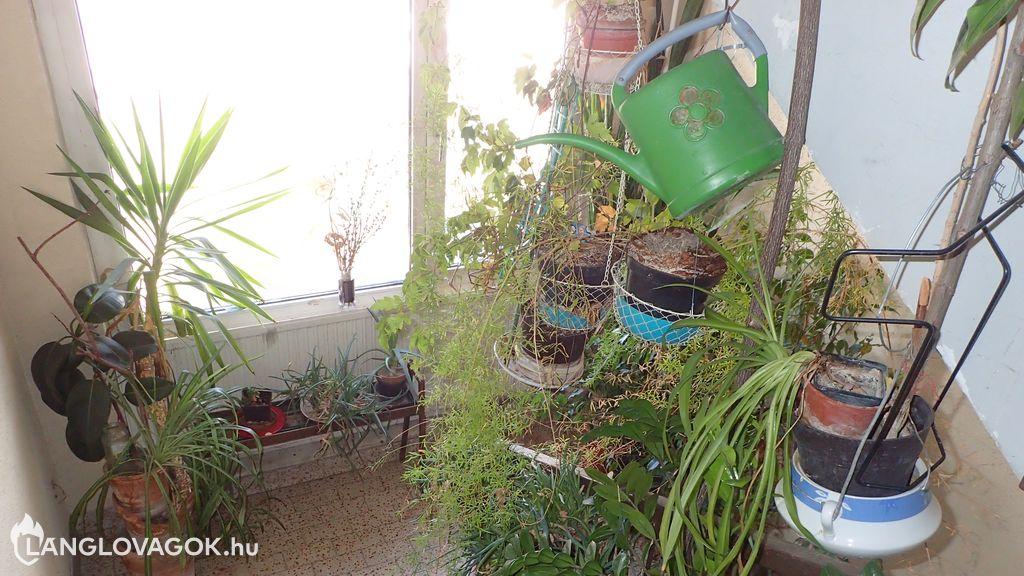 Növények a lakóházak menekülési útvonalán
